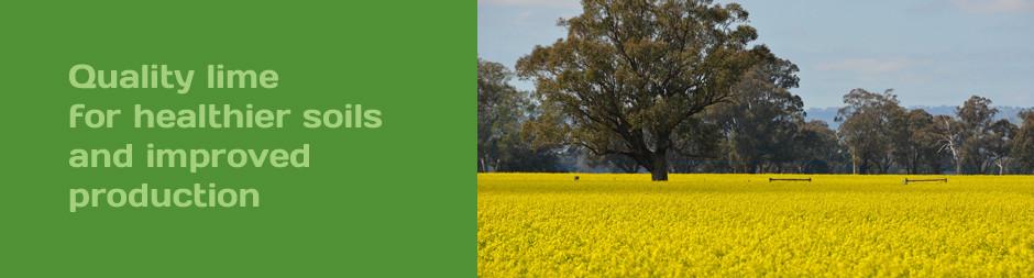 Glencoe Lime crops
